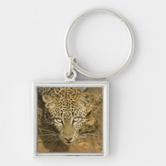 Leopard, Panthera pardus, drinking from a Key Chains