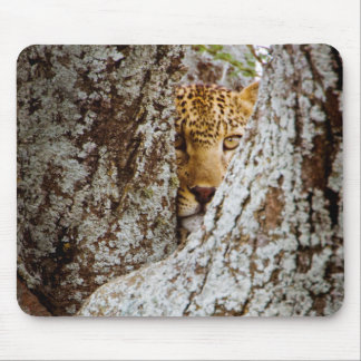 Leopard (Panthera Pardus) Hiding Behind Tree Mouse Pad
