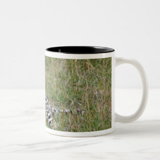 Leopard (Panthera pardus) resting in grass, Two-Tone Mug