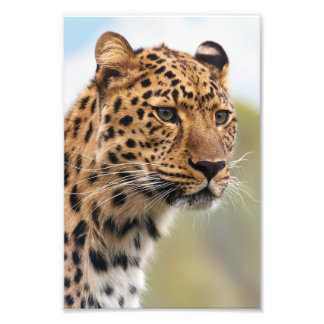 Leopard Photo