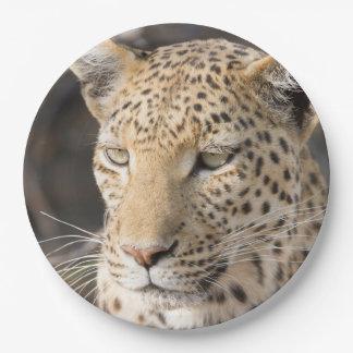 Leopard portrait paper plate