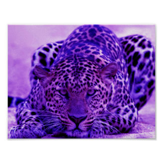LEOPARD POSTER