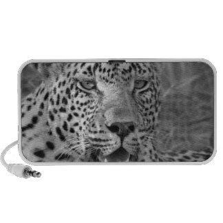 leopard relaxing speaker system