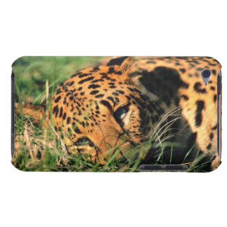 Leopard resting in grass iPod Case-Mate cases