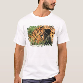 Leopard resting in grass T-Shirt