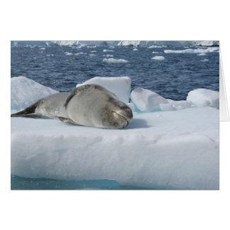 Leopard seal card