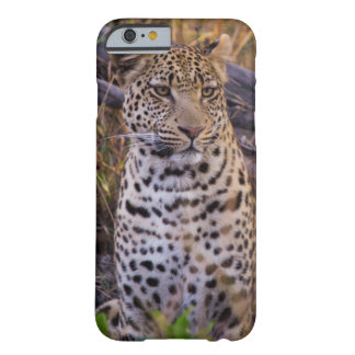 Leopard sitting, Botswana, Africa Barely There iPhone 6 Case