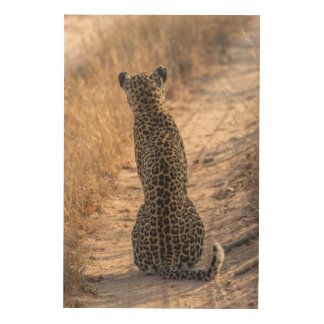 Leopard sitting in road, Africa Wood Wall Decor