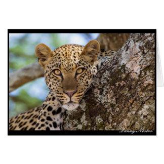 Leopard Stare Card