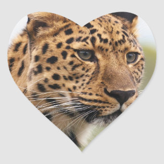 Leopard Wild Cats Heart Sticker
