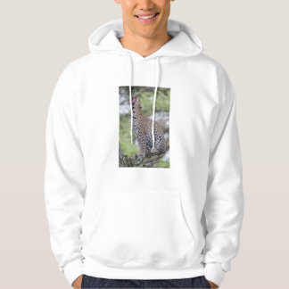 Leopard yawning, South Africa Hoodie