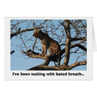 Leopard Yawns While Sitting on a Tree Limb Card