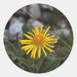 Leopards bane flower round sticker
