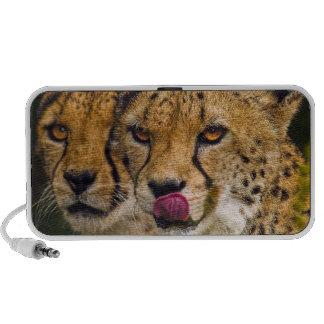 Leopards Doodle Speaker