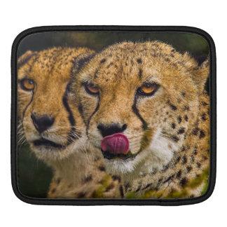 Leopards iPad 2 Sleeve iPad Sleeves