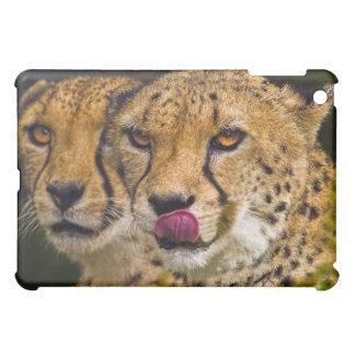 Leopards iPad Case