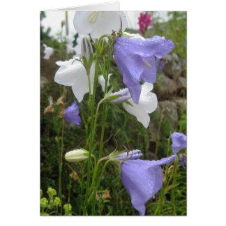 Les Belles Fleurs Card