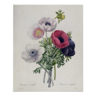 'Les Choix des Plus Belles Fleurs' Poster
