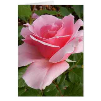 Les Sjulin Pink Rose Photo Note Cards