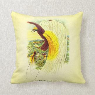 Lesser Bird of Paradise Cushion