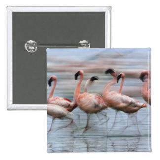 Lesser Flamingos in motion, Phoenicopterus 15 Cm Square Badge