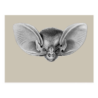 Lesser Long-eared Bat Postcard