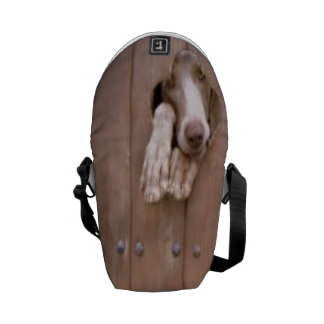 let me out courier bags