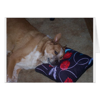 Let Sleeping Dogs Lie Card