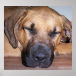 Let Sleeping Dogs Sleep Oil Painting Print