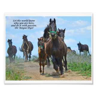 Let the World Know - Friesian Horses Photograph