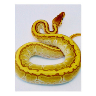 "Letter ""S"" Yellow Ball Python Postcard"
