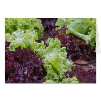 lettuce in the garden card