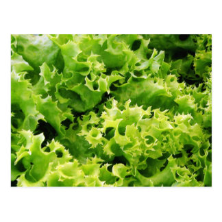 Lettuce Leaves Postcard