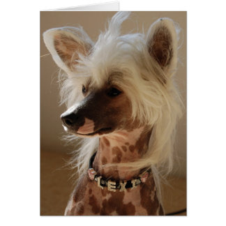 Lexi the great Chinese Crested Card