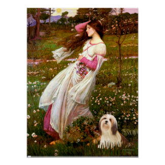 Lhasa Apso 4 - Windflowers Poster