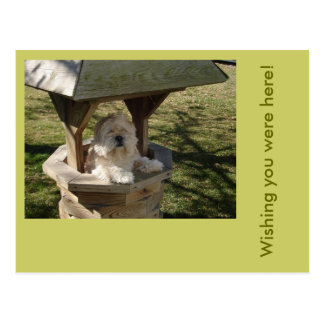 Lhasa Apso in a Well Postcard