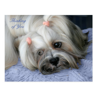 "Lhasa Apso Rugged Little ""Bark Lion Dog"" Post Card"