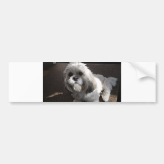 Lhasa Apso sitting Bumper Sticker
