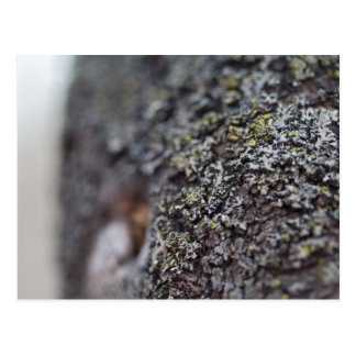 Lichen on Bark Postcard