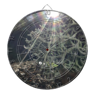 Lichen Rays Dartboard