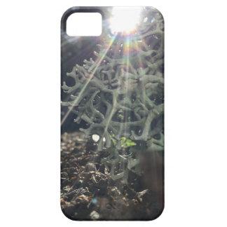 Lichen Rays iPhone 5 Case