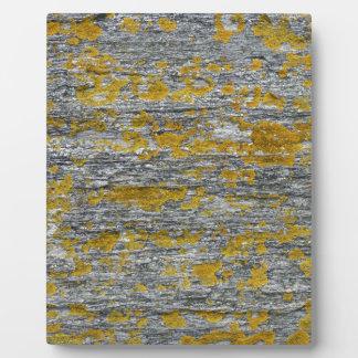 lichens on granite stone plaque