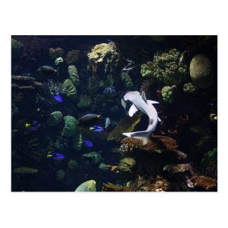 Life Aquatic Postcard
