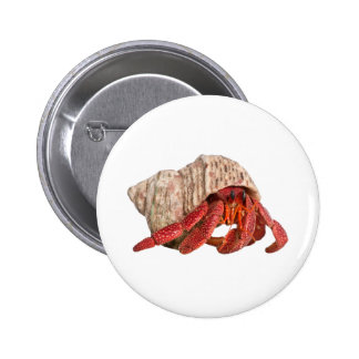 Life in a Shell Pinback Buttons