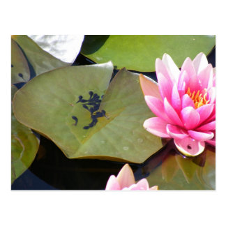 Life in the Lilies: Tadpoles Postcard