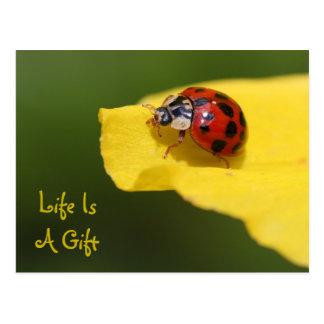 Life Is A Gift Ladybug Postcard