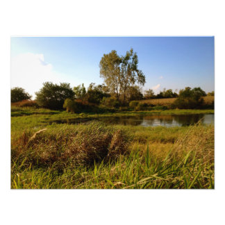Life on the Pond (2) Photo Print