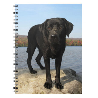 Life's a Beach - Black Labrador Notebooks