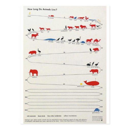 Lifespan of Animals Postcard