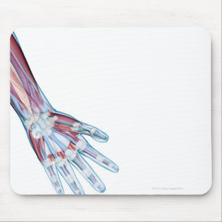 Ligaments in the Hand Mouse Pad